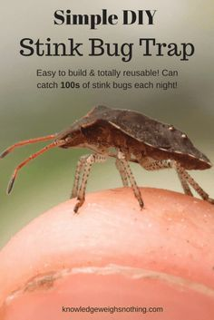 Simple DIY Stink Bug Trap (Works Fast) Build One Today!