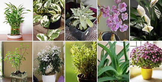 El uso de plantas para embellecer nuestros hogares…
