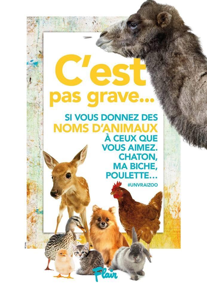 C'est pas grave... si vous donnez des noms d'animaux à ceux que vous aimez. chaton, ma biche, poulette #unvraizoo