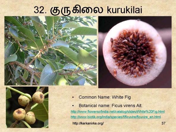 32. குருகிலை kurukilai Flower names, Botanical, Botanist