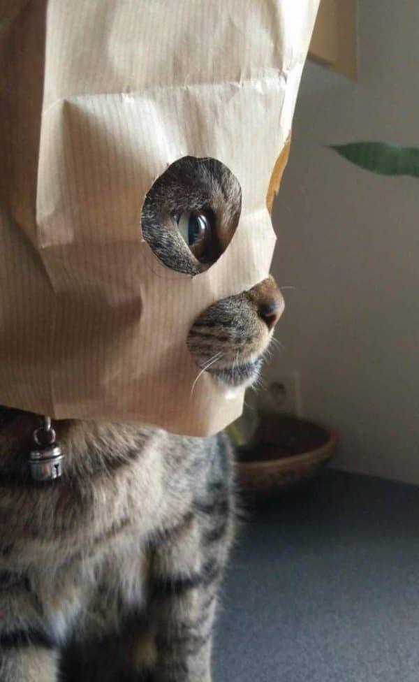 Смешные картинки с надписью про животных (38 фото) | Самые ...