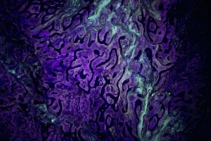 Une toile abstraite? Un tissu cérébral colorisé? Pas du tout!Vous avez sous les yeux l'image d'une paroirocheuse éclairée par de lalumière UV, prisedans les grottes italiennes de Frasassi (province d'Ancône). Les curieuses formations en forme ...