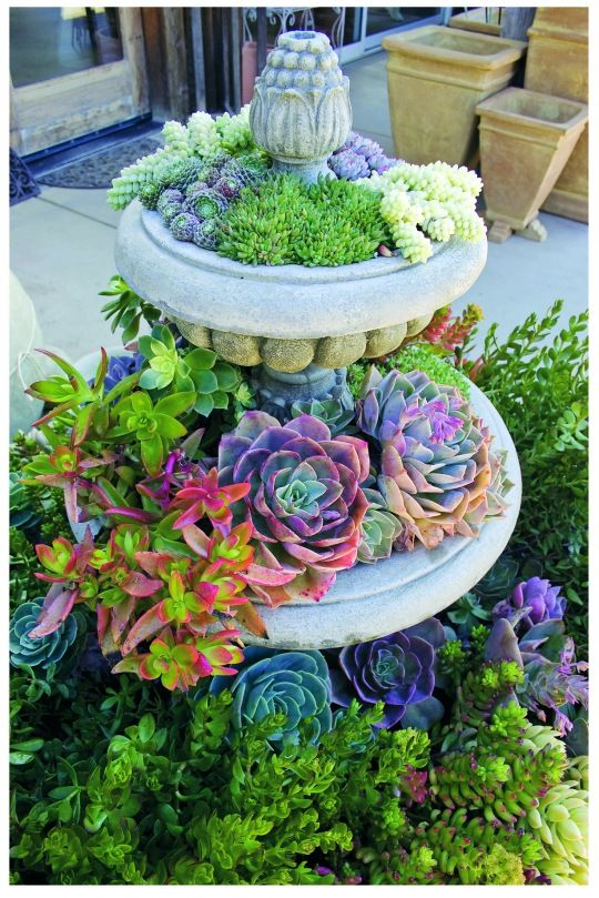 succulents!!: Gardens Ideas, Water Fountain, Succulents Fountain, Birdbaths, Color, Succulents Gardens, Gardens Planters, Birds Bath, Great Ideas