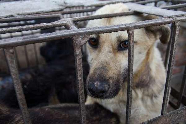 Libera alerta de que seis de cada 10 municipios gallegos incumplen la Ley de Protección Animal