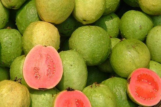La goyave est le fruit du goyavier un arbre originaire des r gions tropicales sa mince peau - Arbre murier fruit comestible ...