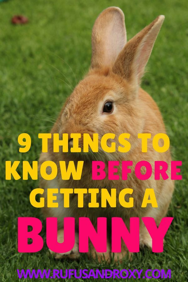 Want A Pet Rabbit 9 Things To Know Before You Get A Bunny Pet Rabbit Pet Bunny Pet Rabbit Care