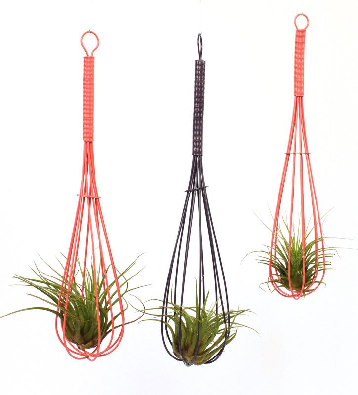 This is a unique hostess gift. Air plants are very easy to care for. You can hang the whisk on wall, or by a magnate on the refrigerator to add some whimsy to a kitchen. 12""