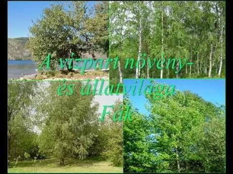 20 A vízpart növény  és állatvilága   Fák