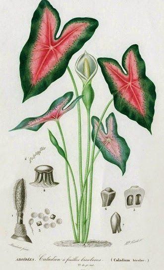 Olímpia Reis Resque: Plantas mágicas