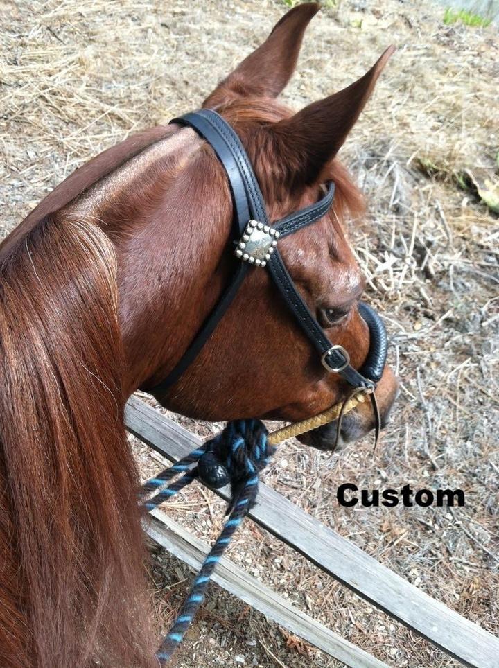Custom Bitless Bridle Black Hackamore Natural Rawhide Bosal with Mecate Horse