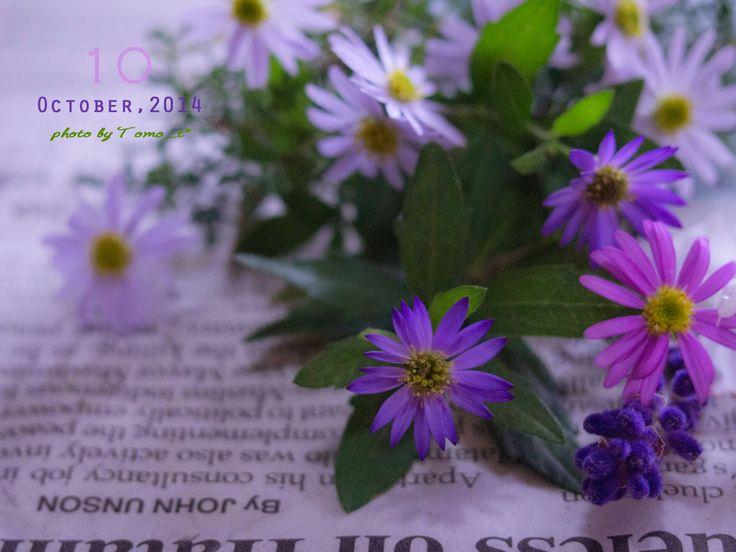 道のりを記憶に残して: 庭の花摘みノート/姫小菊、ラベンダー、ミニバラと都わすれ/花・ガーデニング