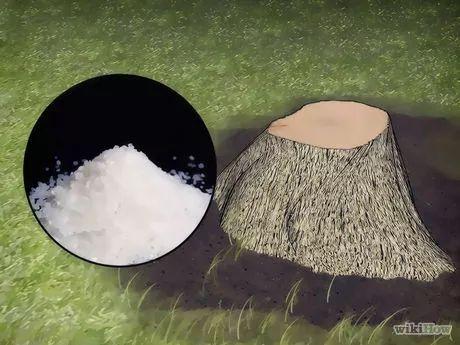 d truire une souche d 39 arbre id es pour le potager. Black Bedroom Furniture Sets. Home Design Ideas