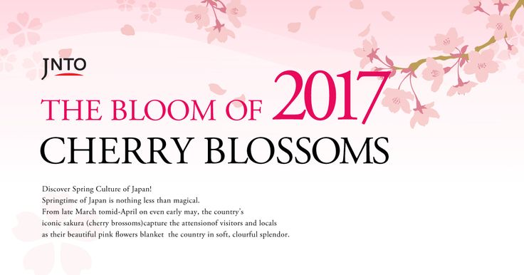 Cherry blossom blooming forecast (date of first bloom)
