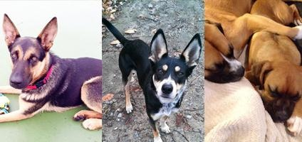Dogster Readers Show Off Their Rescue Dogs  My Rigby is in the middle!