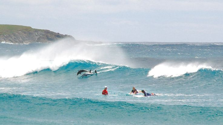 Surfers and dolphins enjoying the waves - Imagine experiencing that! #Australia #Byronbay #suring #wildlife #kilroy