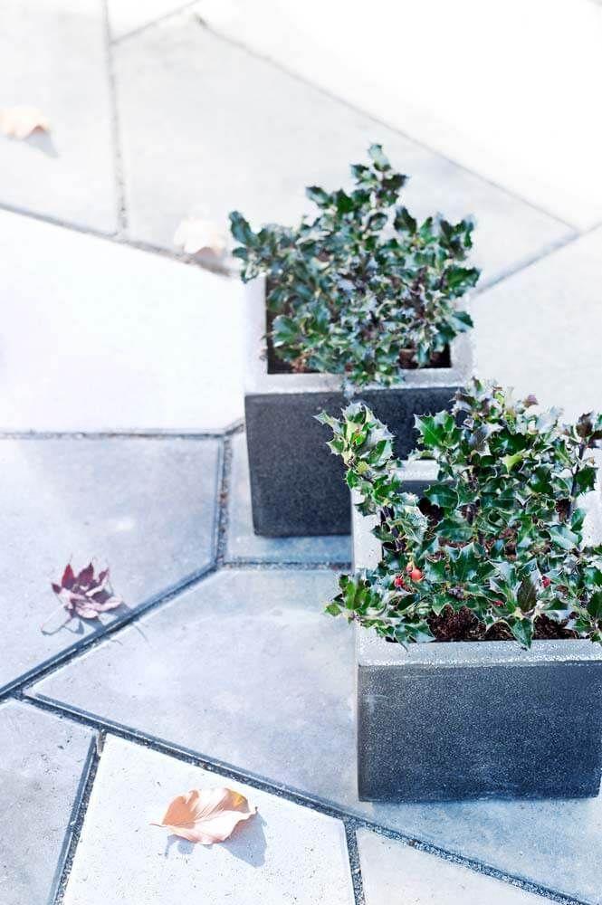 Wir stellen die Gartenpflanze des Monats November vor: Die Stechpalme