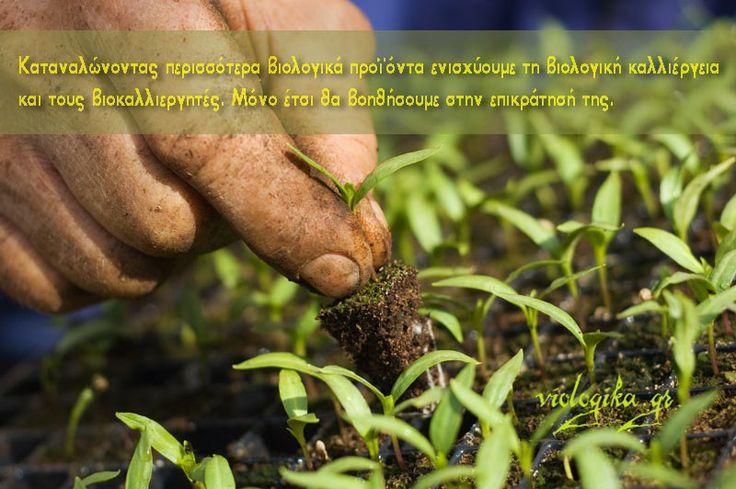 Καταναλώνοντας περισσότερα βιολογικά προϊόντα ενισχύουμε τη βιολογική καλλιέργεια και τους βιοκαλλιεργητές. Μόνο έτσι θα βοηθήσουμε στην επικράτησή της. http://www.viologika.gr/viologiki-kalliergeia.php