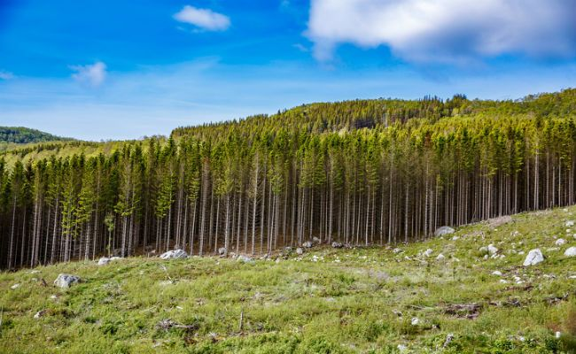 Norway Commits To Zero Deforestation | Care2 Causes