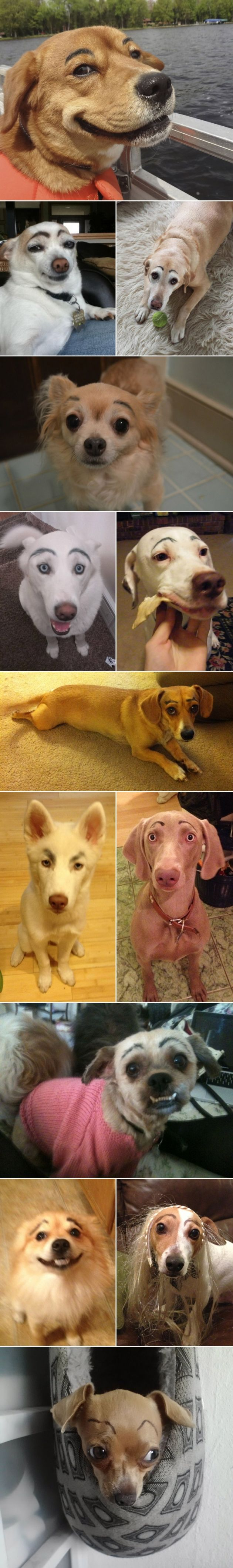 Dogs with eyebrows// It's weird my dog already has super thin ones. I always tell him to quit tweezing his brows. HAHA