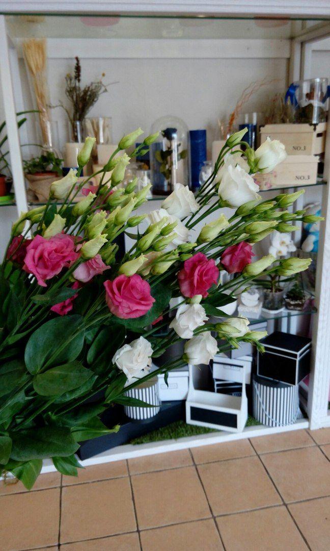 """По-особенному нежно мы любим эустому. Второе название этого невероятно красивого цветка - лизиантус, что в переводе с латинского означает """"горький цветок"""". Сорта красного, белого, жёлтого цветов и их оттенков выведены искусственно. Изначально же цветы эустомы имели синий окрас. Салон красоты и цветов Viva Rosa  📞050-362-35-55  ул. В. Вернадского, 1/3"""