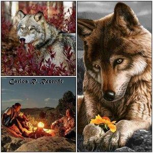 """// Uma noite, um velhos índio contou ao seu neto sobre a guerra que acontece dentro das pessoas. Ele disse: """" A batalha é entre dois 'lobos' que vivem dentro de todos nós"""". ... Um é mau: é a raiva, inveja, ciume, tristeza, desgosto, cobiça, arrogancia, pena de si mesmo, culpa, ressentimento,"""