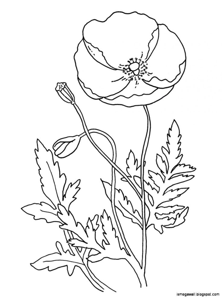 Coloring Pages Of Flowers Games : The 1191 best images about girl guide activities songs graces