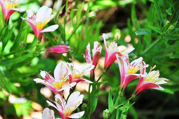 Le jardin botanique de Funchal, une explosion de couleurs