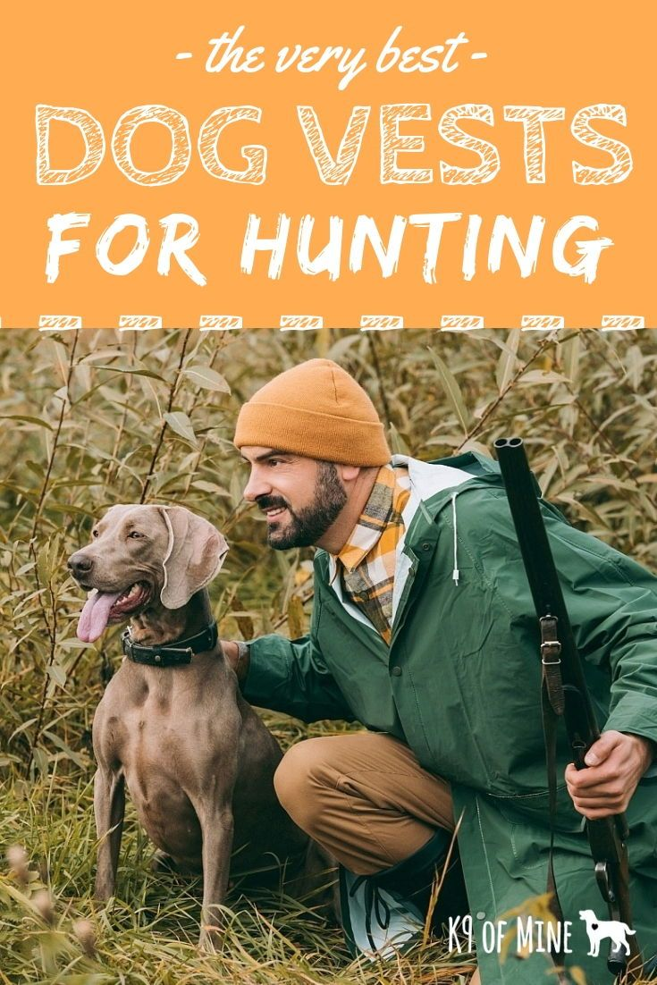 Check Out The Best Vests To Keep Your Pooch Safe And Comfortable
