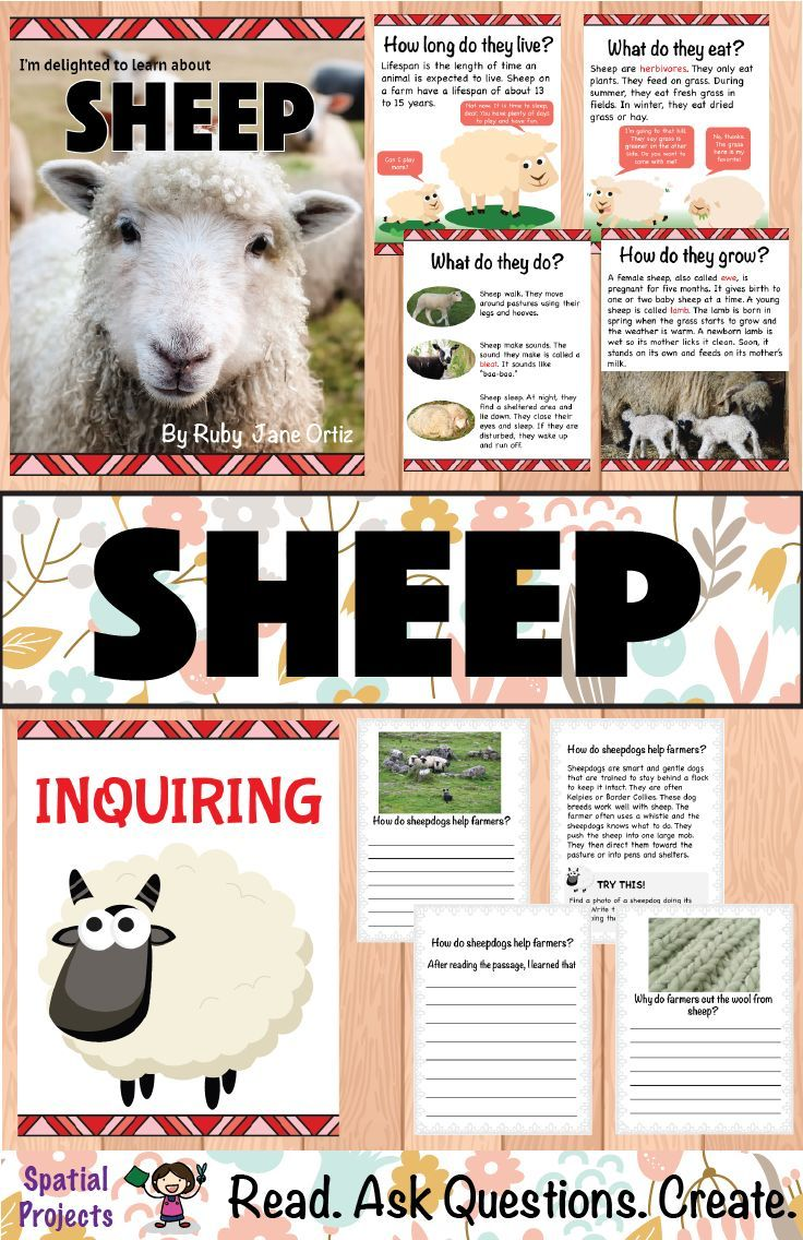 All About Sheep Nonfiction Unit Literacy Center Activity Nonfiction Kindergarten Writing [ 1136 x 736 Pixel ]