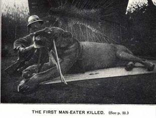 Tsavo Man Eaters – Chicago, Illinois - Atlas Obscura
