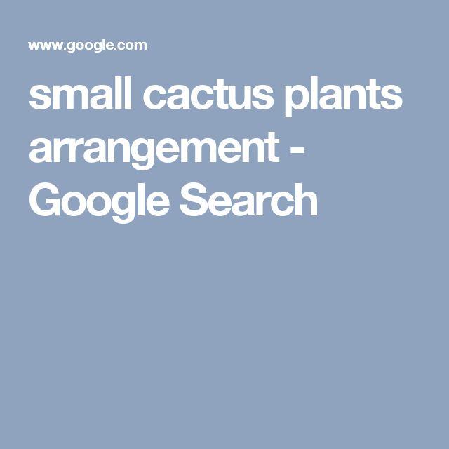 small cactus plants arrangement - Google Search