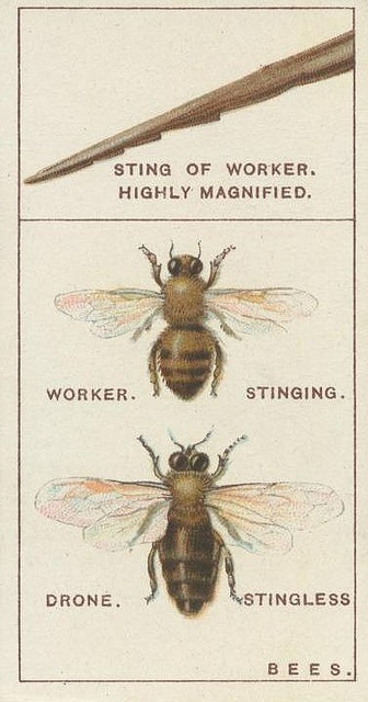 ≗ The Bee's Reverie ≗ Bees