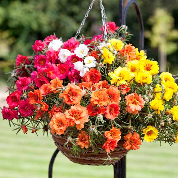 Top 3 Hanging Basket Plants My Favorite Pictures
