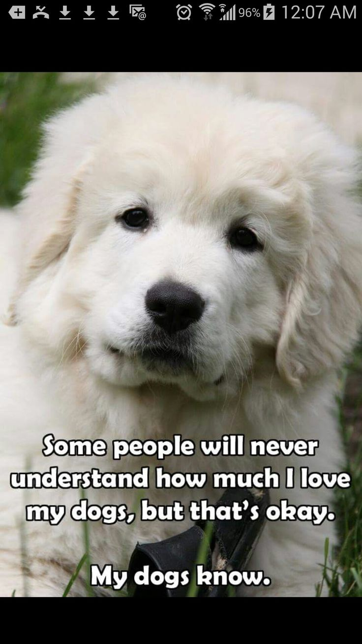 I Love My Dog Quotes 160 Best Dogs Images On Pinterest  Adorable Puppies Animal Memes