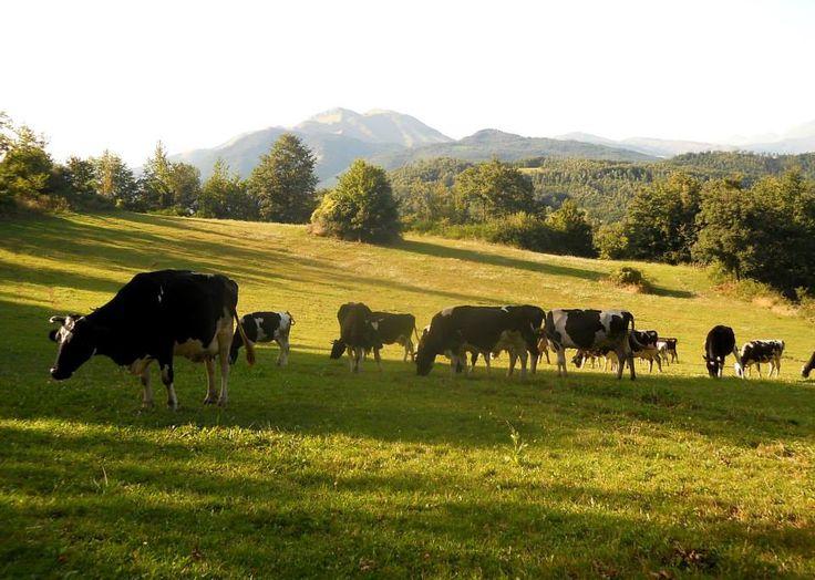 Festival Foresta in Festa - IV edizione  La fattoria didattica - presso Colle Verrico, Montereale