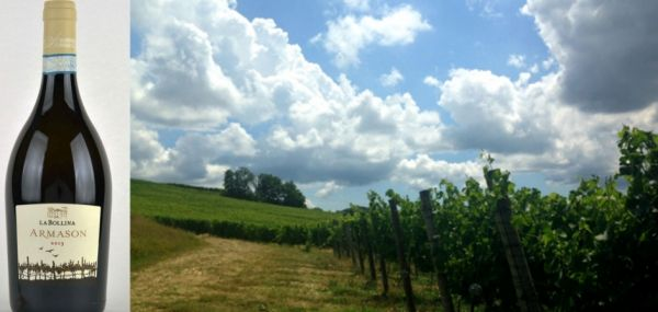 Il vino del sabato: Il fascino discreto della freschezza: l�Armason della Societ� Agricola La Bollina - Vino - World Wine Passion
