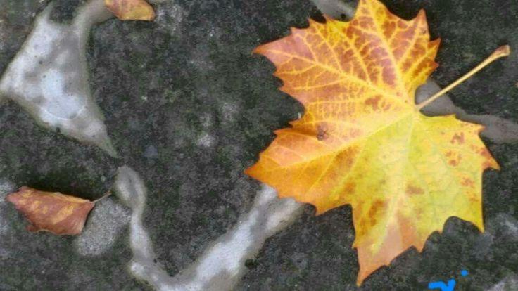 Caldi colori Su corpi inermi Creano danze - Rosalba 31/10/2015