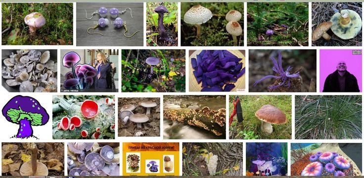 Поклонская и фиолетовые грибы среди фиолетовых грибов в поисковой выдаче Google Картинки.