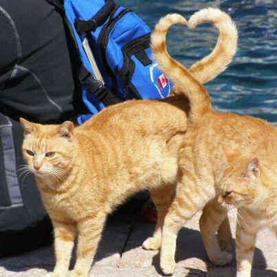 ♥♥ COOL ♥♥: Picture, Photos, Cats, Animals, Tail, Kitty