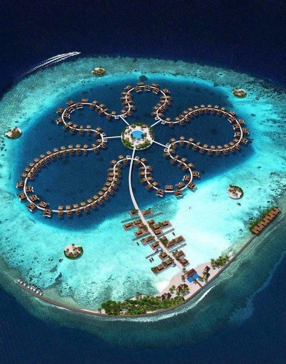 Ocean Flower, Maldives. Located in the Indian Ocean.