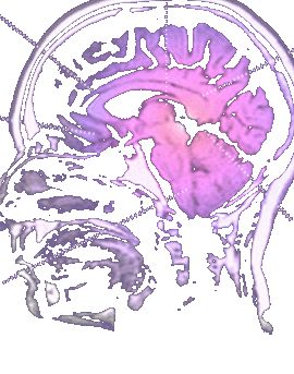 GREAT interactive site with new information about the teenage brain, facilitated by the latest findings in neuroscience. - Very interesting articles on teenagers, I still do not understand them however.