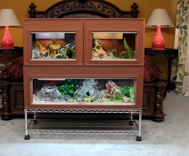 Reptile set up Bearded Dragon Terrarium Pinterest