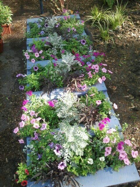 Pallet planter localgrownplants.com