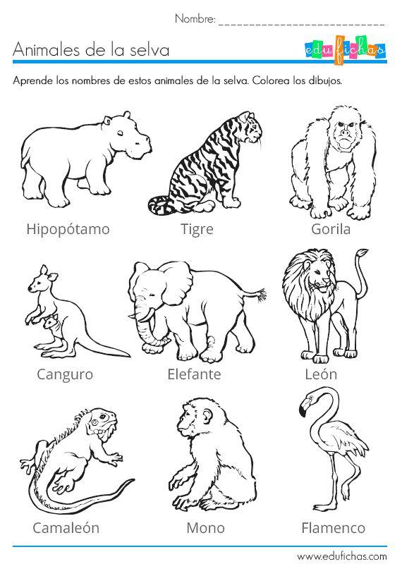 Los animales de la selva para colorear http www for Actividades para el jardin de infantes