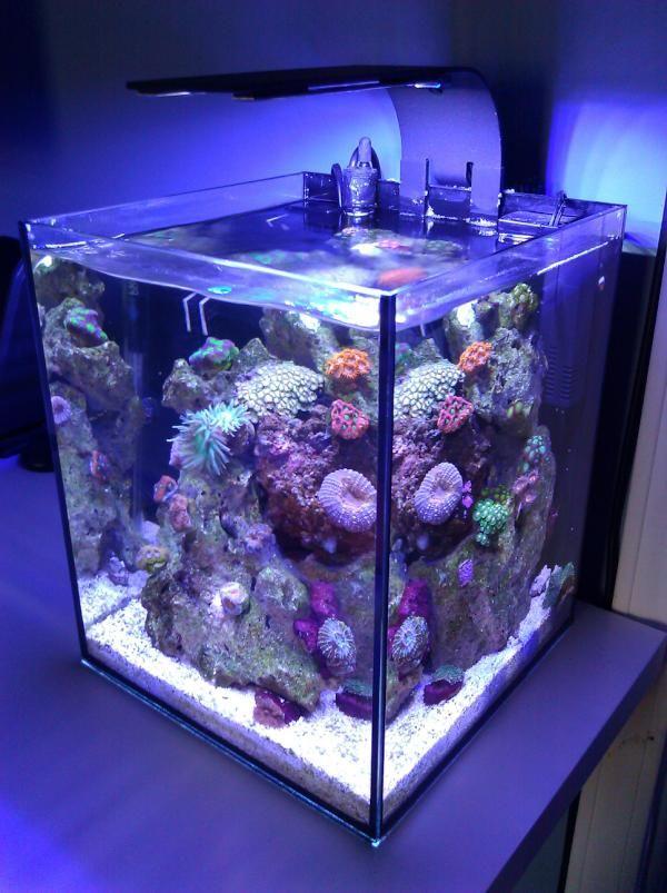 Great Saltwater Aquarium   Find Incredible Deals On Saltwater Aquarium And Saltwater  Aquarium Accessories. Let Us Show You How To Save Money On Saltwater  Aquarium ...
