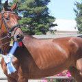 Leopold DMV, Hanoverian Gelding bred by Dreamcatcher Meadows.     Find your dream horse at www.dreamcatchermeadows.com    #equestrian