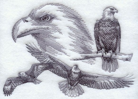 Eagle Sketch Embroidery Pattern  777quotW X 556quotH 499