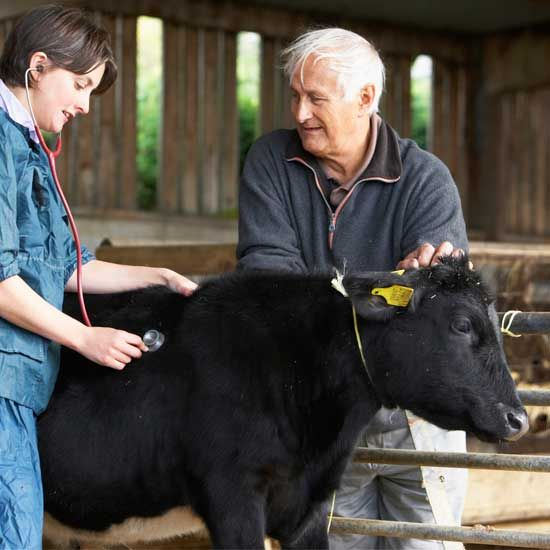 Here is an overview of common livestock diseases organized by species.