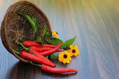Горячий перец с цветы в корзине stock photo