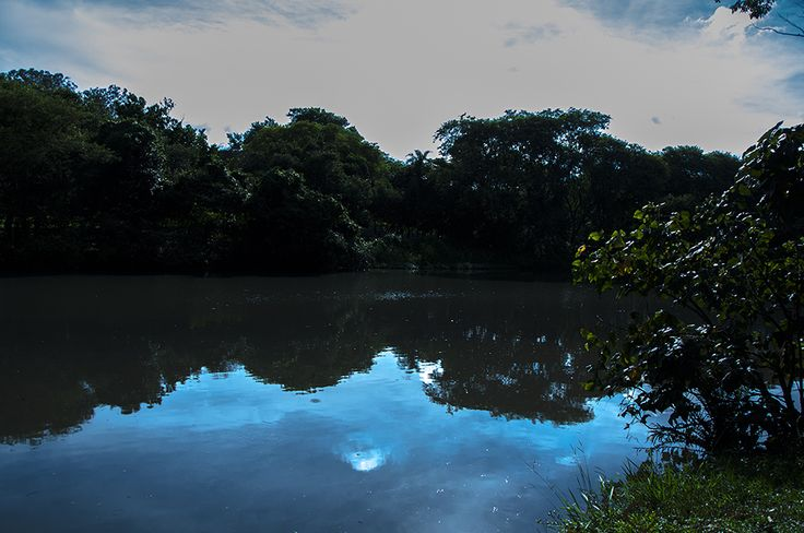 Parque do Ibirapuera, reflexos